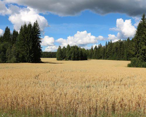 field-countryside-grain-3591804.jpg